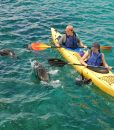 p-8474-gps79_kakak_with_sea_lions_in_san_cristobal_1.jpg
