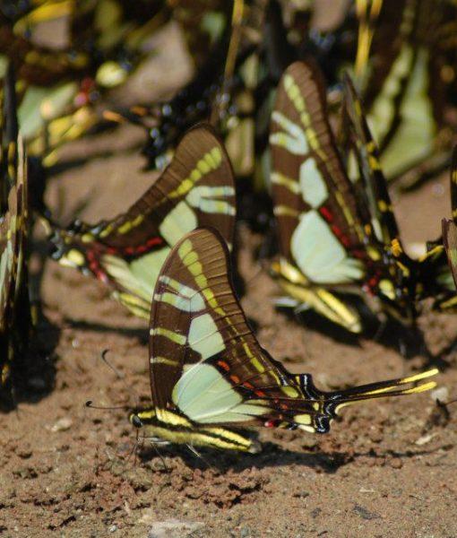 p-5847-butterflies3.jpg