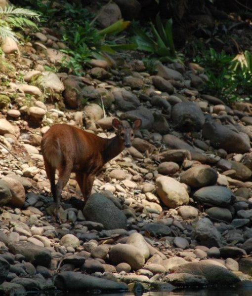 p-5847-deer.jpg