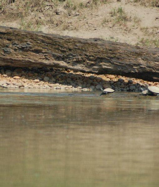 p-5847-turtles.jpg