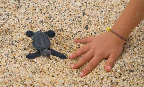 p-8680-baby_sea_turtle.jpg