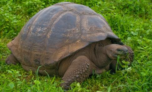 p-8680-tortoise.jpg