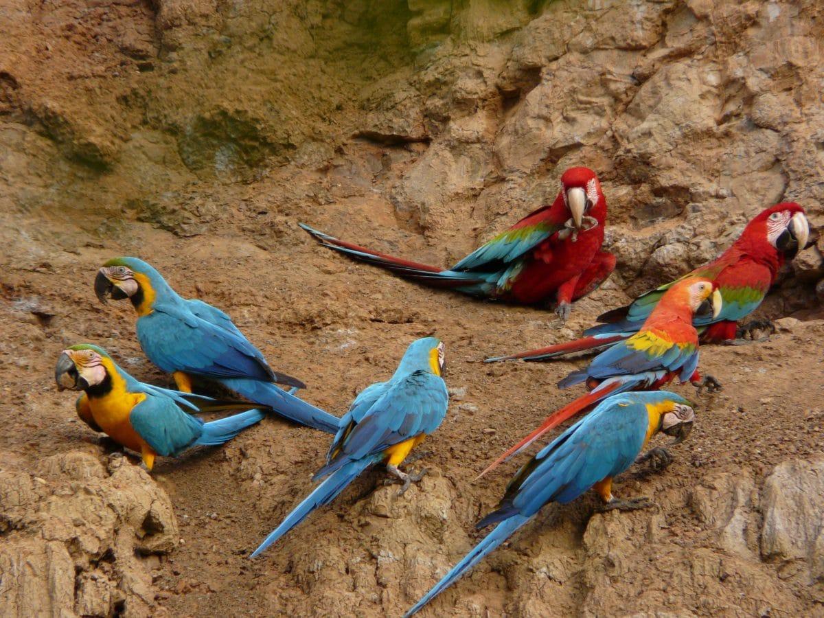 Explore the amazon jungle peru trip advisors - Tambopata Research Center Amazon Jungle Lodge