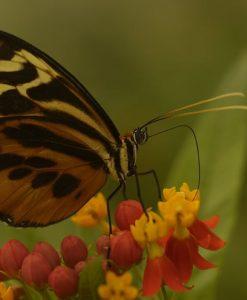p-10158-mariposa2.jpg
