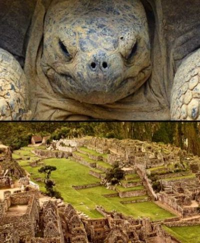 Galapagos and Machu Picchu Trips
