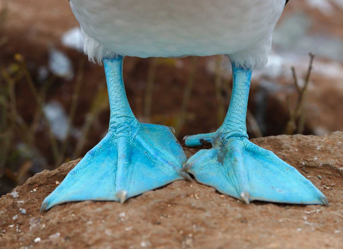 Galapagos Trips