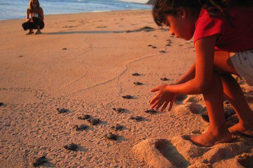 Baby Sea Turtles!