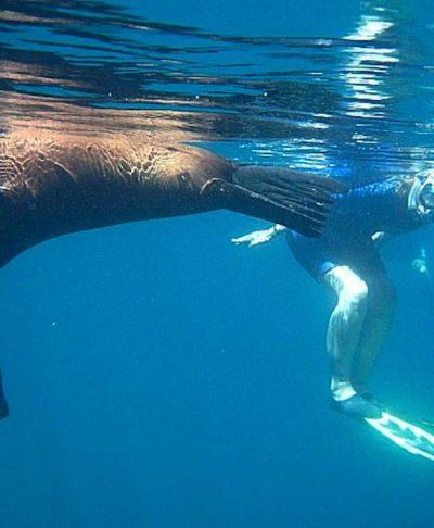 Los Islotes Sea Lion