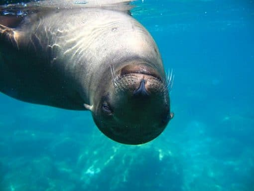 Los Islotes Sea Lion