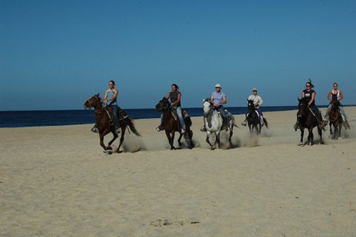 Horse back riding Todos Santos beaches
