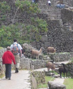 P4al Km 104 Royal Inca trail (3)