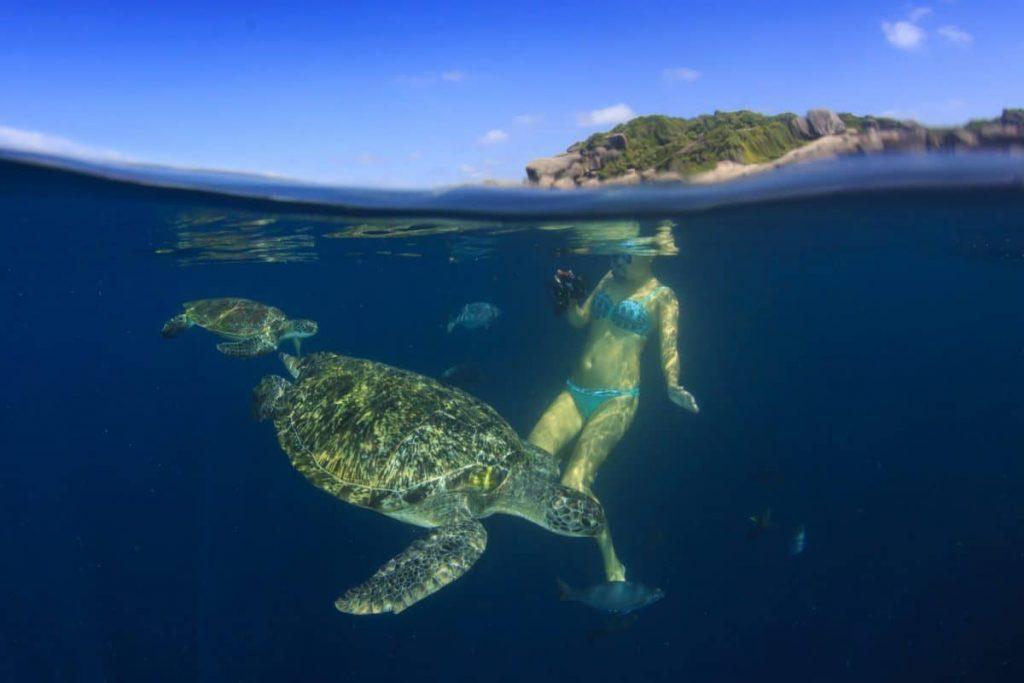 best snorkeling spots in the galápagos islands detour